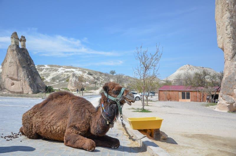 Camelo no Cappadocia em Turquia fotos de stock royalty free