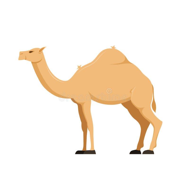 Camelo no crescimento completo O mamífero, camelids da família, agrupa animais fender-hoofed ilustração do vetor
