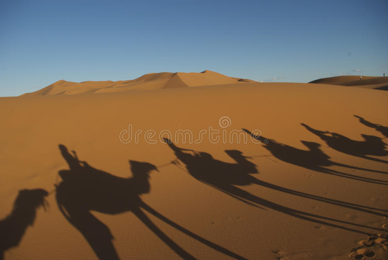 Camelo no Sahara foto de stock royalty free