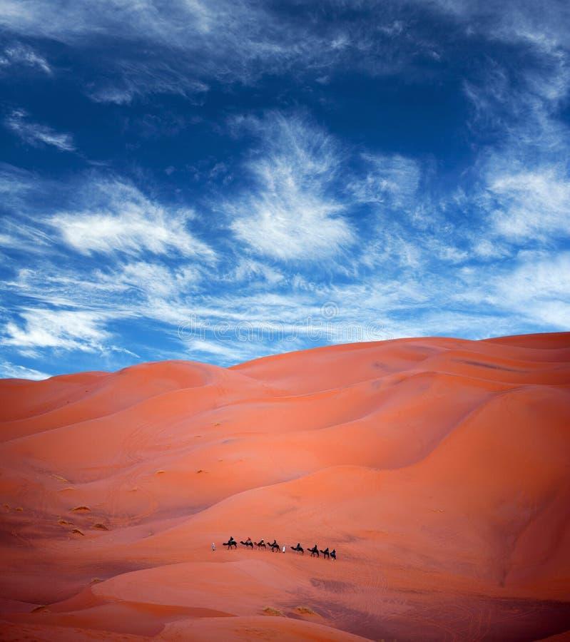 Camelo que trekking em Sara Ocidental, Marrocos imagem de stock royalty free