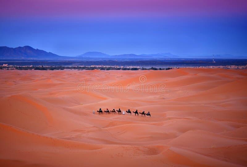 Camelo que trekking em Sara Ocidental, Marrocos fotografia de stock