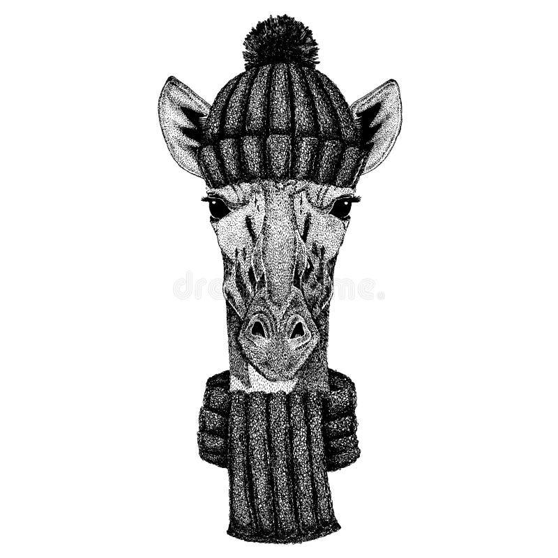Camelopard, żyrafy Chłodno zwierzę jest ubranym trykotowego zima kapelusz Ciepła pióropuszu beanie bożych narodzeń nakrętka dla t ilustracja wektor