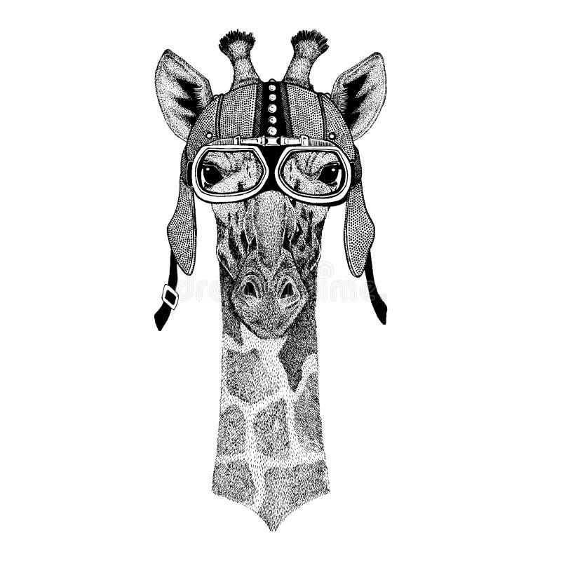 Camelopard, żyrafy dzikie zwierzę jest ubranym motocykl, aero hełm Rowerzysta ilustracja dla koszulki, plakaty, druki ilustracja wektor