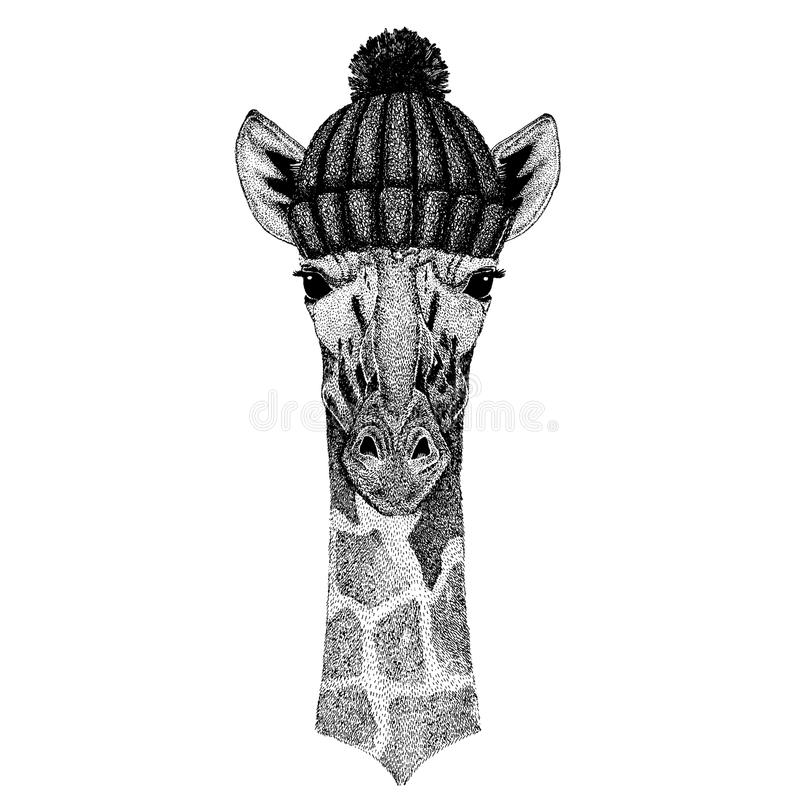 Camelopard, żyrafy Chłodno zwierzę jest ubranym trykotowego zima kapelusz Ciepła pióropuszu beanie bożych narodzeń nakrętka dla t royalty ilustracja