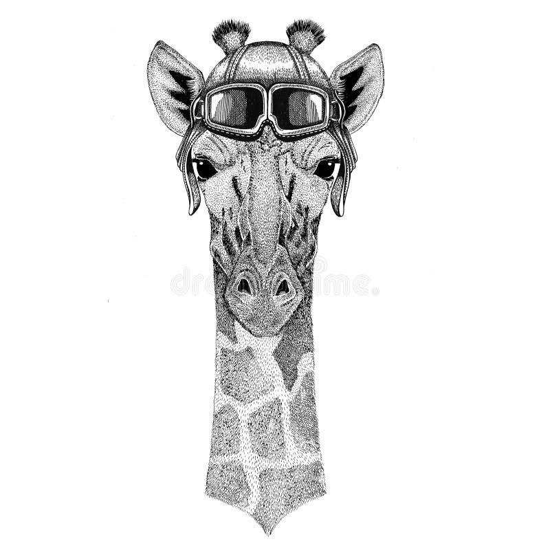 Camelopard, Giraffe Flieger, Radfahrer, gezeichnete Illustration des Motorrades Hand für Tätowierung, Emblem, Ausweis, Logo, Flec lizenzfreie abbildung
