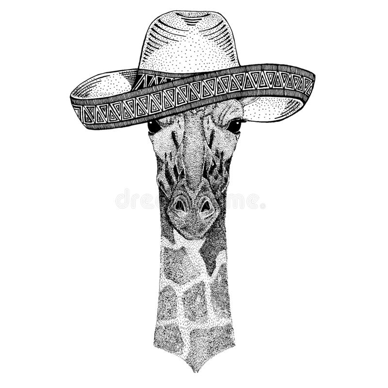 Camelopard, giraffe wearing traditional mexican hat. Classic headdress, fiesta, party. Camelopard, giraffe wearing traditional mexican hat. Classic headdress royalty free illustration