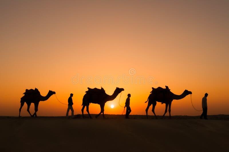Camelos da silhueta no deserto de Thar foto de stock royalty free