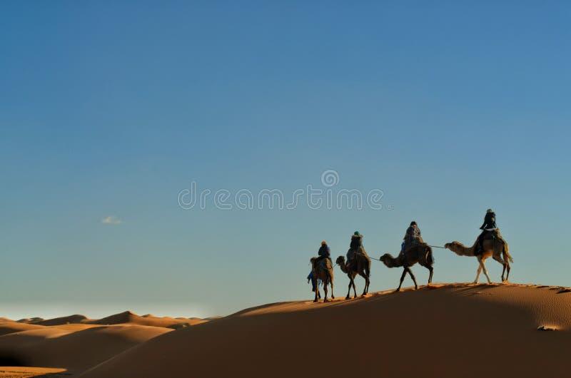 Camelos do Berber fotos de stock