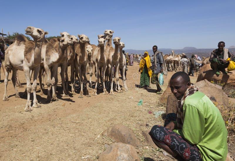 Camelos para a venda em um do mercado o maior dos rebanhos animais do chifre de países de África Babile etiópia imagens de stock