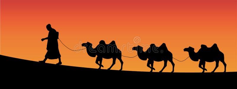 Camels. Vector illustration of camels walking in the desert