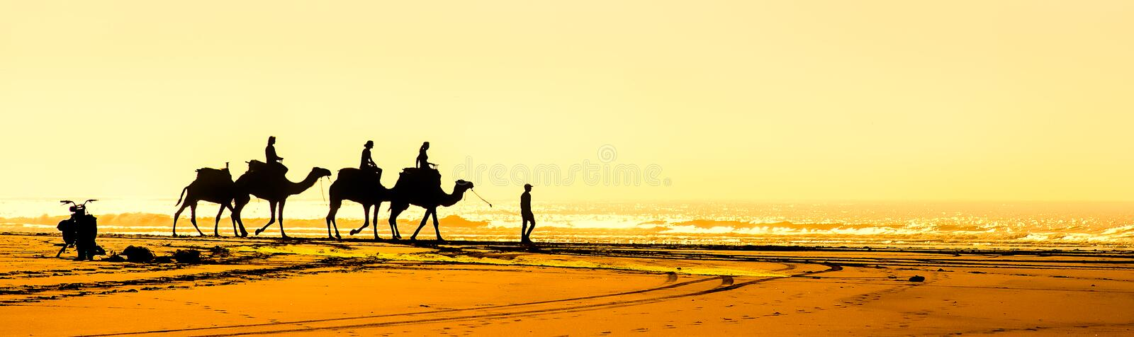 Camels on Beach by Essaouira in Morocco stock images