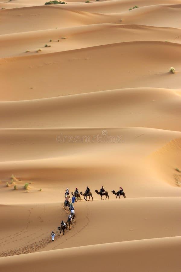 Camels caravan heading across the sahara stock photography