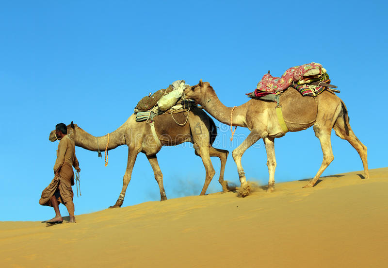 Camels in desert. Cameleer in desert - camels caravan on sand dune royalty free stock photos