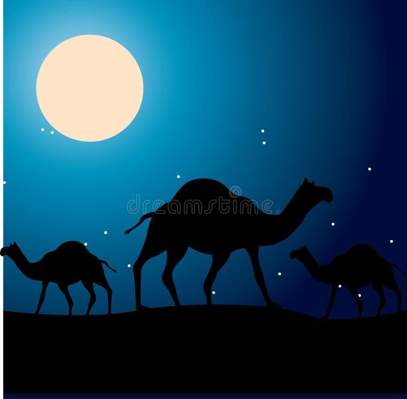 Camels design. Over night sky background illustration vector illustration