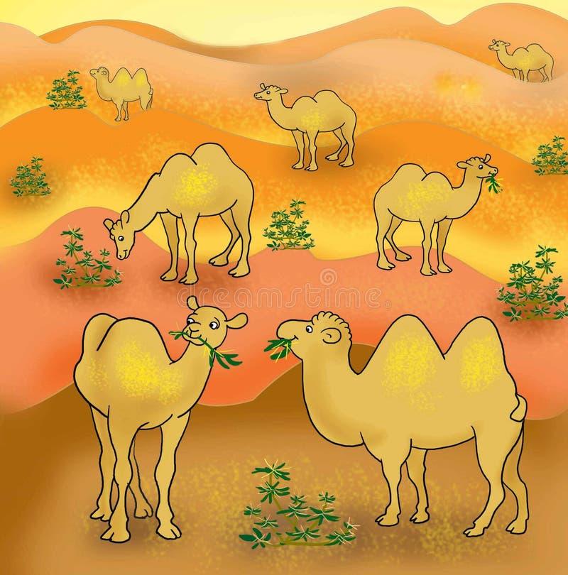 Camels royalty free illustration