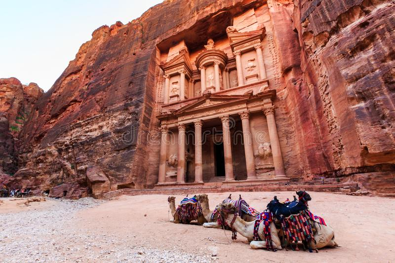 Camels in front of the Treasury at Petra the ancient City Al Kh. Azneh in Jordan lit by the sun royalty free stock image