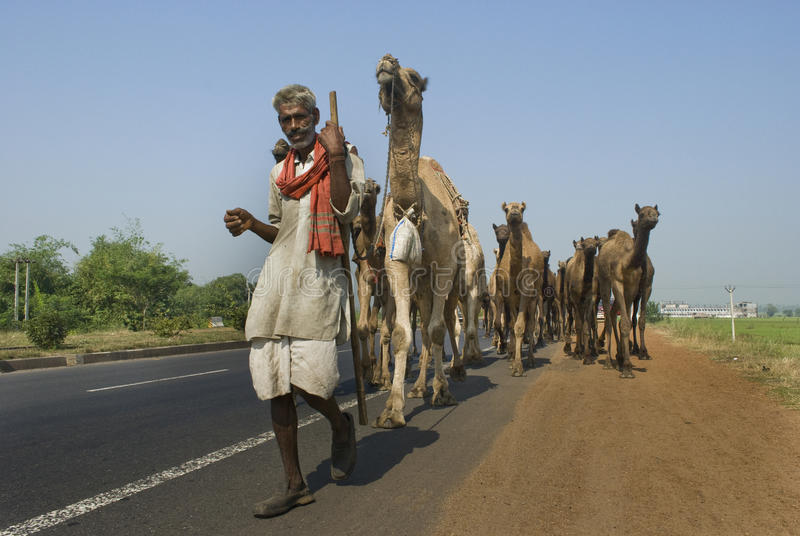 Download Camels on highway in India editorial stock image. Image of asia - 20376079