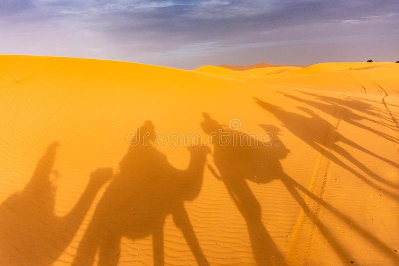 Camels& x27 ; ombres images stock