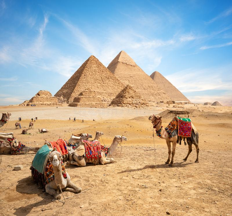 Camels and Pyramids. Camels in sandy desert near mountains at sunset royalty free stock image