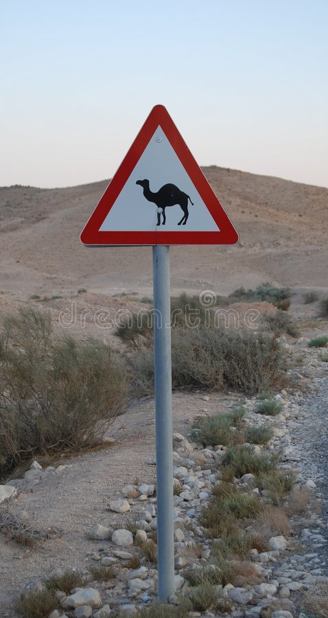 Camels on the Road stock photos