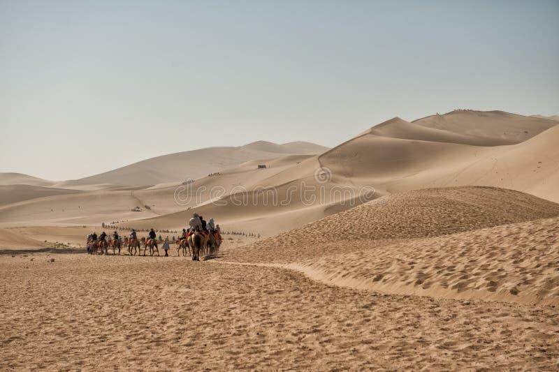 Camels Safari At Mingsha Sand Dunes Editorial Stock Image