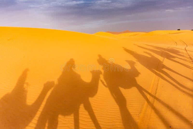 Camels& x27; schaduwen stock afbeeldingen