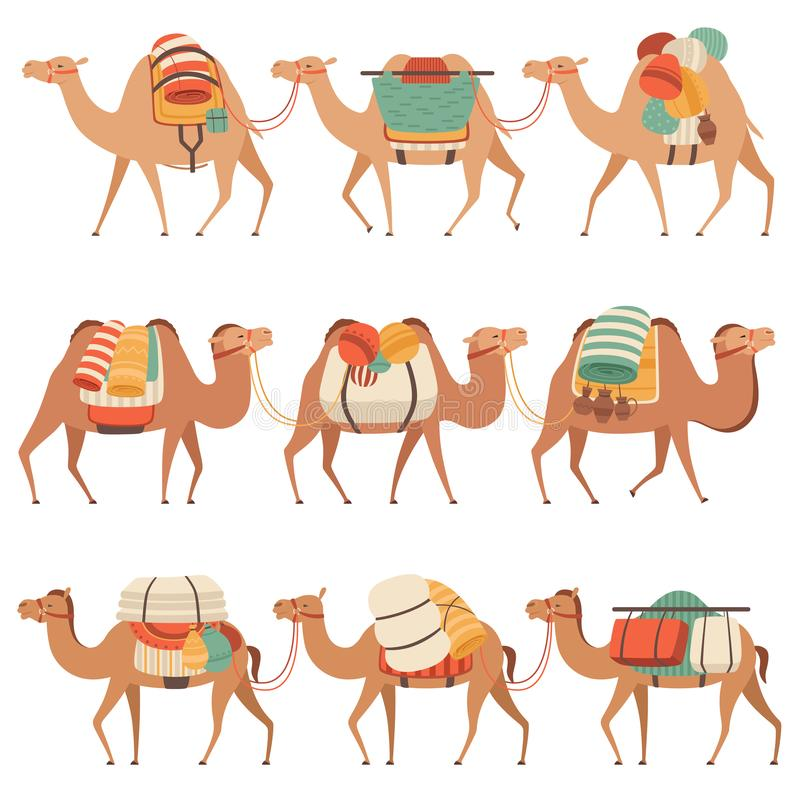 Camels Set, Desert Animals Walking with Heavy Load, Side View Vector Illustration vector illustration