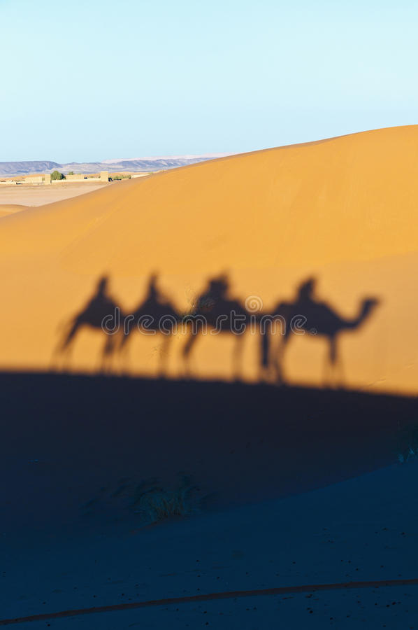 Download Camels Shadows Over Erg Chebbi At Morocco Stock Photo - Image: 25886952