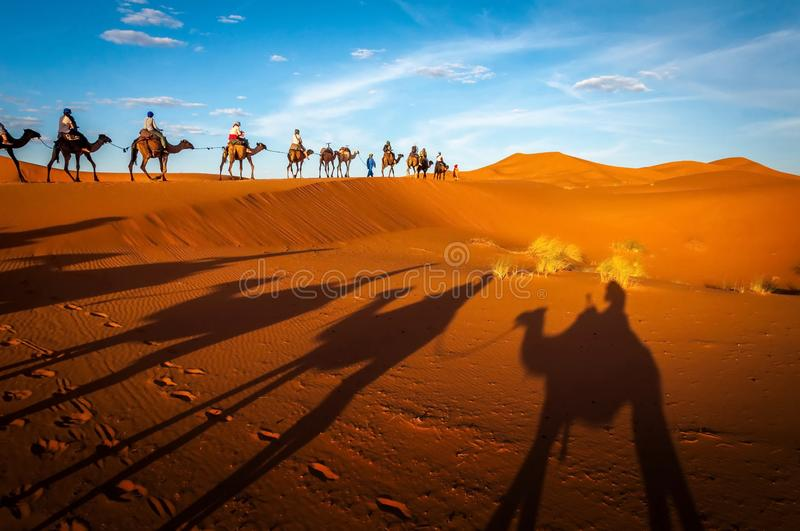 Camels trekking guided tours in the Sahara desert Merzouga Morocco. Tourists tours with the dromadaires and the camels in the Sahara desert stock images