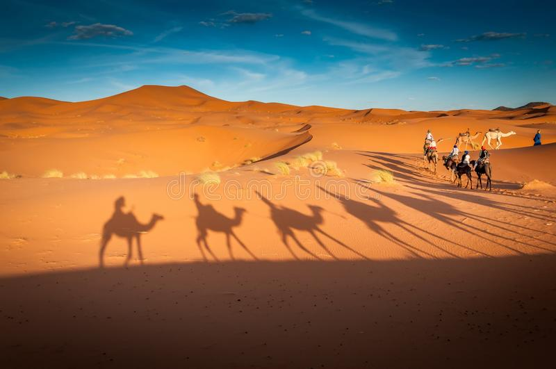 Camels trekking guided tours in the Sahara desert Merzouga Morocco. Tourists tours with the dromadaires and the camels in the Sahara desert stock image