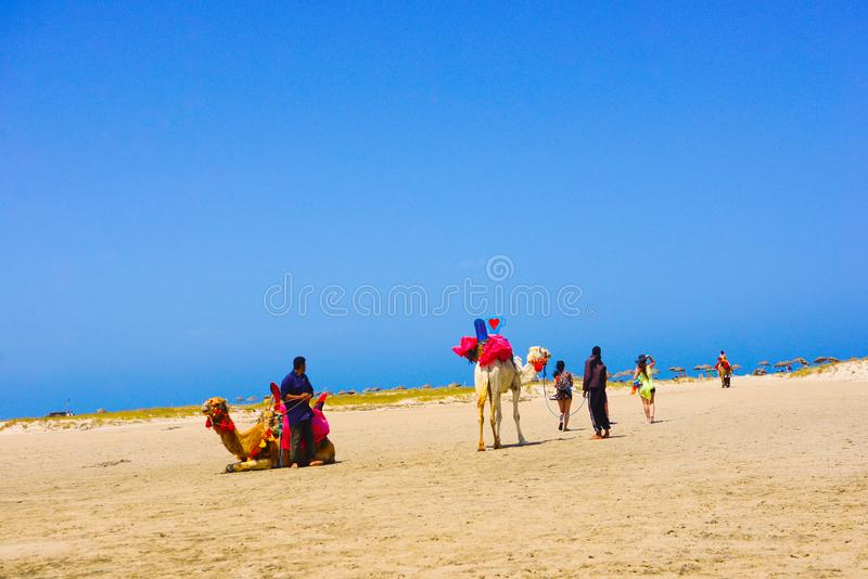 Camels and Tropical Beach, Flamingos Island, Travel Tunisia, Summer Holidays, Mediterranean Sea stock image