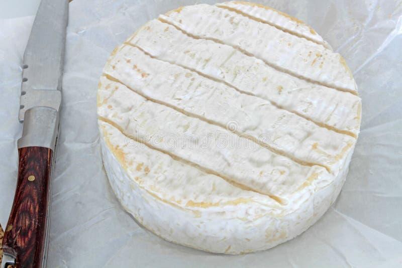 camembert lizenzfreies stockbild