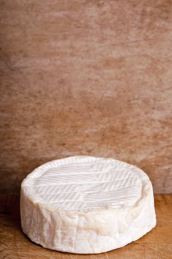 Camembertkäse stockbilder