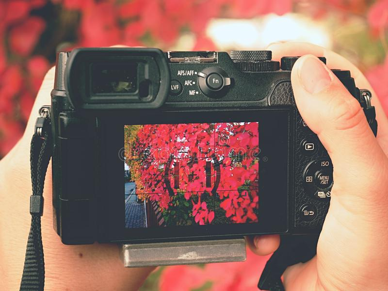 Camera close to red autumnal leaves to take impressive photos. Photographer hold camera close to red autumnal leaves to take impressive seasonal photos. Modern stock photography