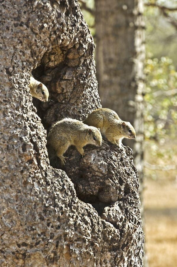 Camera degli scoiattoli fotografie stock