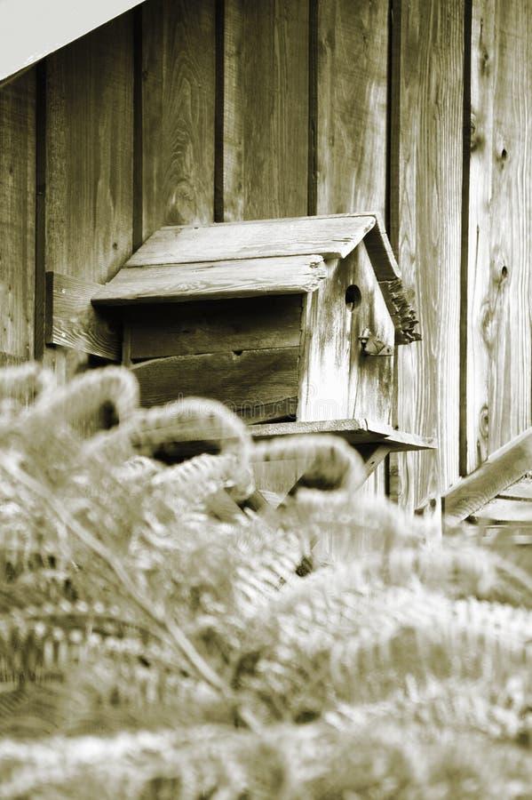 Camera Dell Uccello Immagine Stock