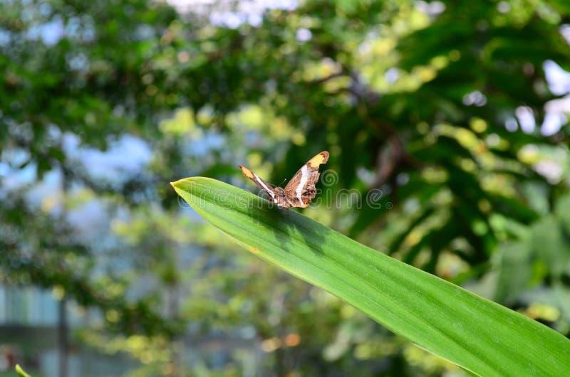 Camera delle farfalle fotografia stock libera da diritti
