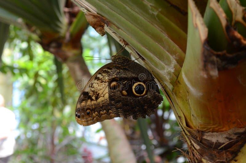 Camera delle farfalle immagine stock
