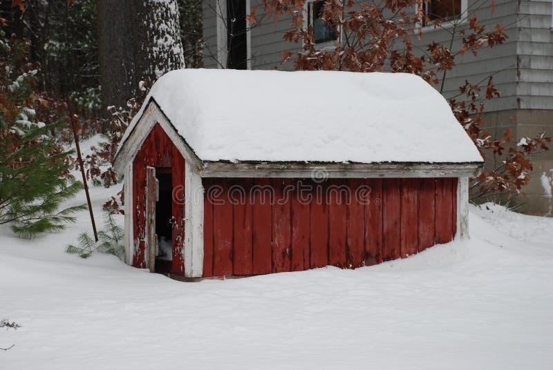 Download Camera di cane di inverno immagine stock. Immagine di casa - 3895285