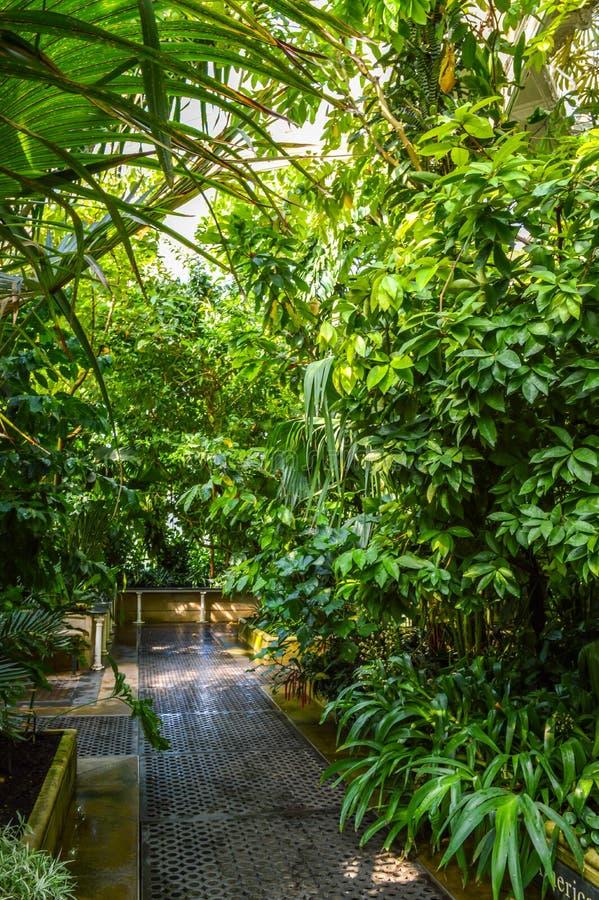 Camera di palma, giardini di Kew, Londra, Regno Unito immagini stock libere da diritti