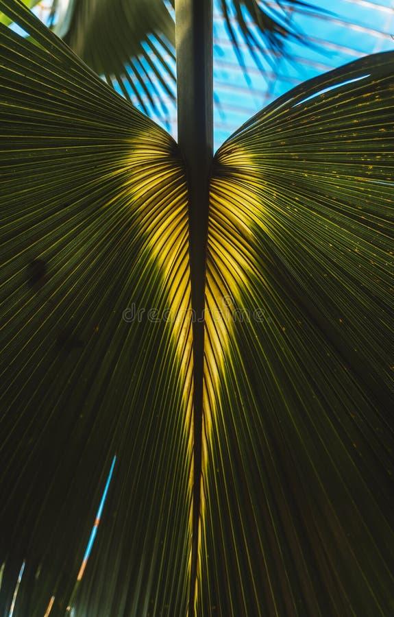 Camera di palma, giardini di Kew nell'inverno/autunno immagine stock