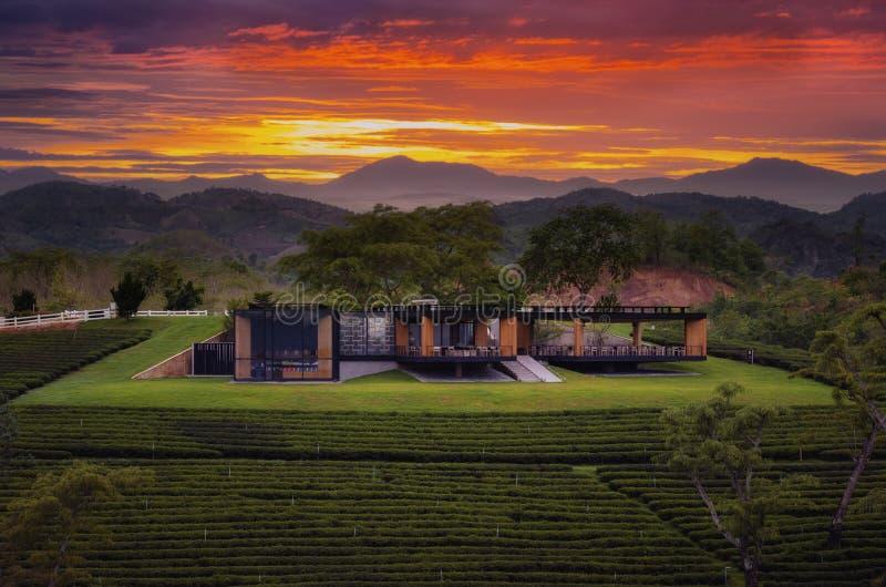 Camera ed azienda agricola del tè durante il tramonto immagini stock