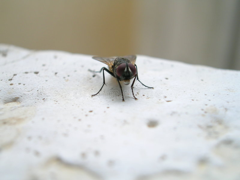 Camera fly1 fotografie stock