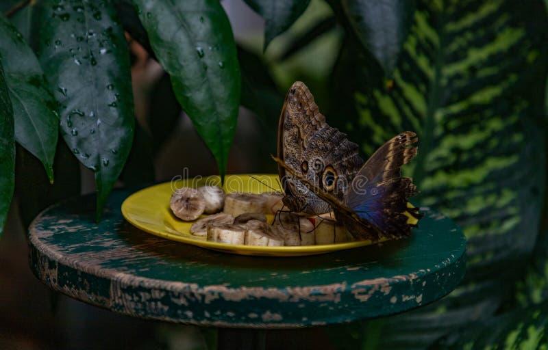 Camera II della farfalla immagini stock