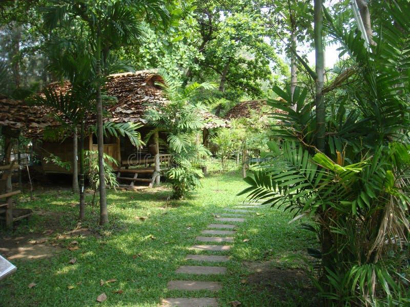 Camera nella bevanda rinfrescante di aria di verde di foresta Tailandia fotografia stock