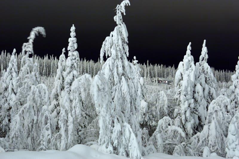 Camera nella foresta fotografia stock libera da diritti