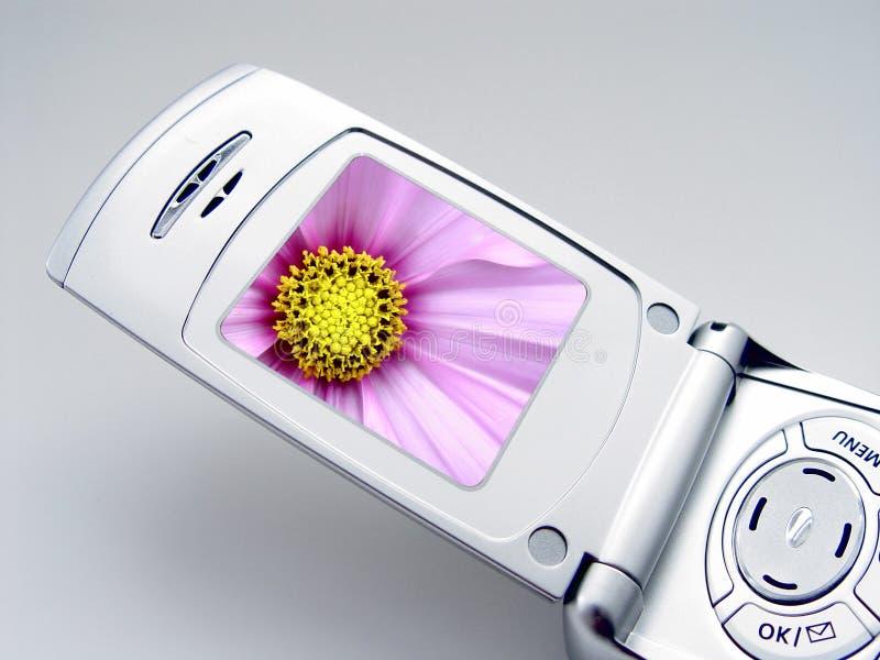 Camera Phone royalty free stock photos