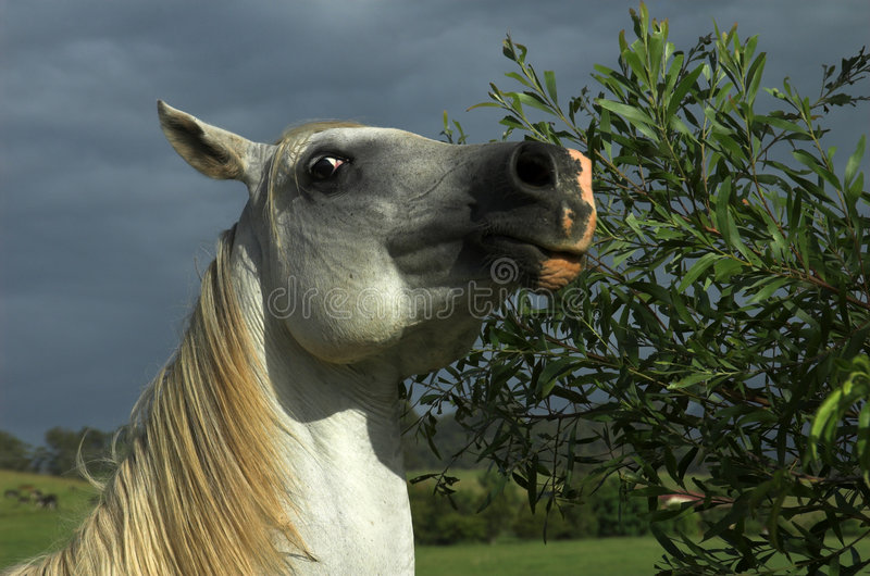 Download Camera Shy Horse stock photo. Image of apprehensive, animal - 501880