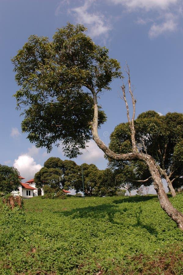 Camera tropicale immagine stock libera da diritti