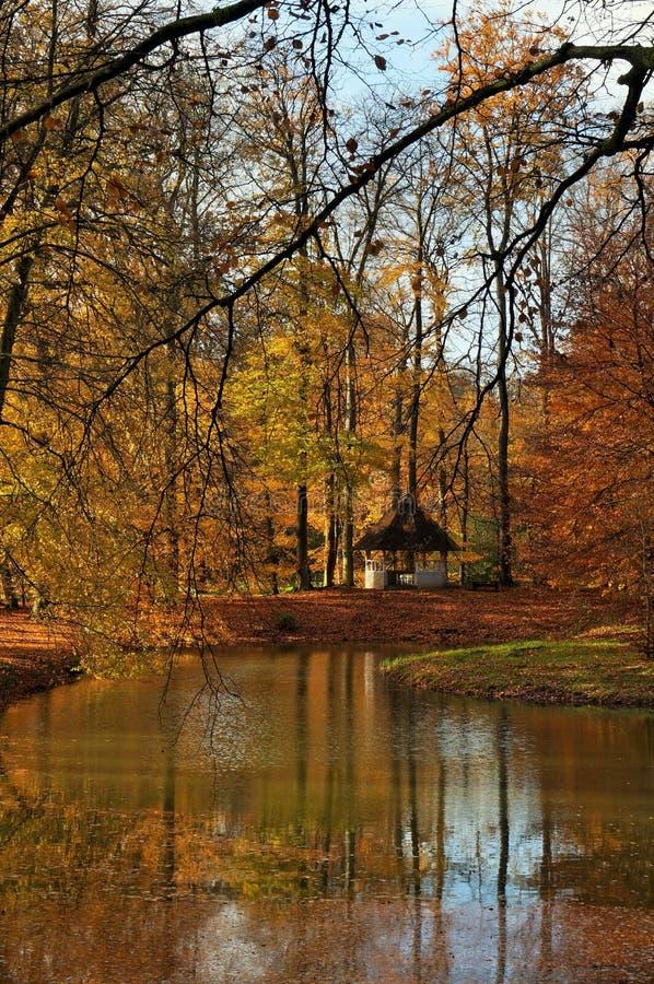 Camera in una foresta di autunno immagine stock